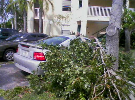 spring hill fl Emergency Tree Service Removal 24