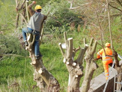 Spring Hill Tree Service